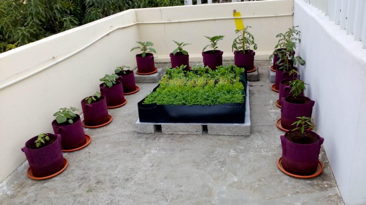 زراعة النبات داخل المنزل أو فوق السطح