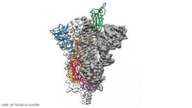 خريطة جينية لفيروس كورونا