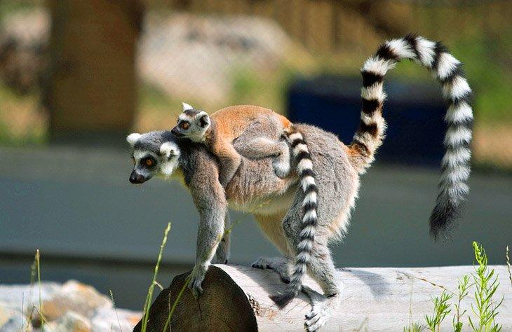 حديقة حيوان إدمونتون فالي