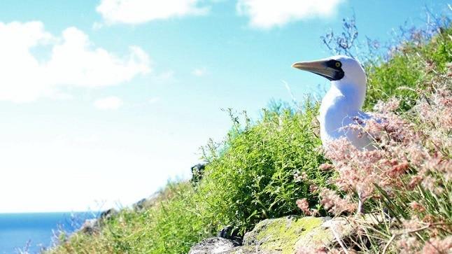 الطيور البحرية
