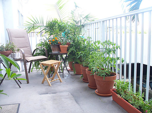 حدائق الأسطح
